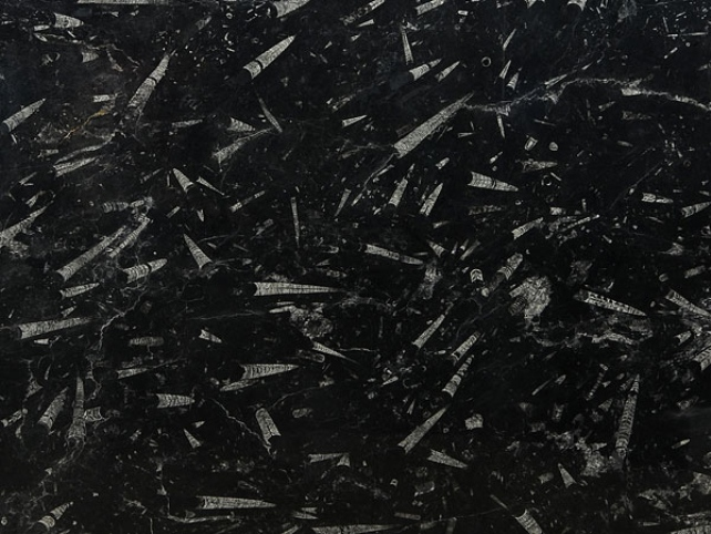 FOSSIL BLACK MARBLE SLAB 30MM