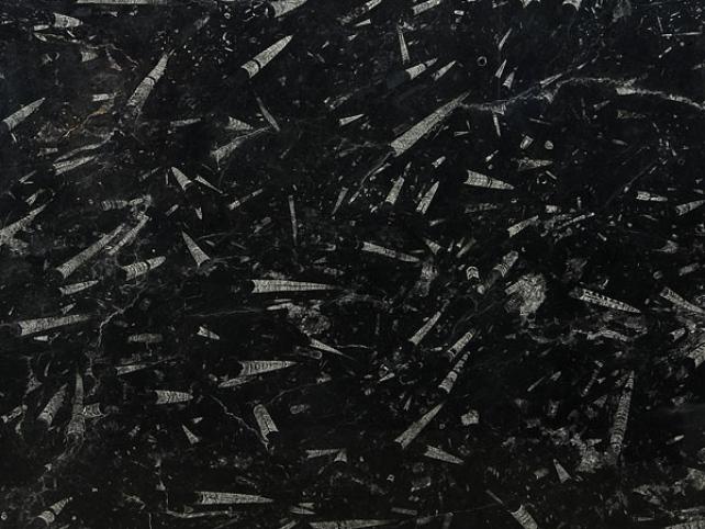 FOSSIL BLACK MARBLE SLAB 30MM